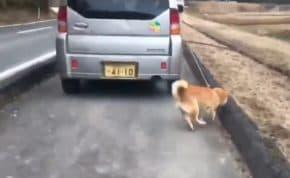 歩道を軽自動車で暴走しながら犬を引きずって散歩させる高齢者男性が登場!全ての行動がヤバい