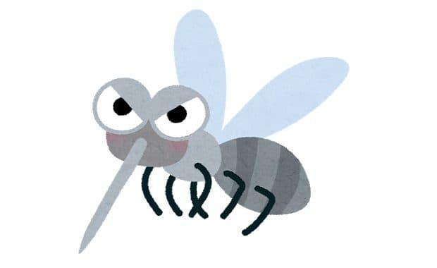 「蚊」は有名ミュージシャンの曲が流れている環境では吸血・交尾回数が大幅に減少する!今年の夏はこの曲を垂れ流そう