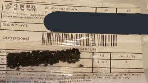 中国から不審な謎の種が日本にも大量に送られ始める!ブラッシング詐欺やAmazonから個人情報流出の可能性